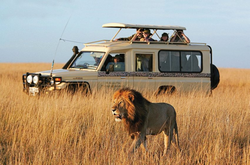 The Best Safari in Africa: 3 Things You Should Look For